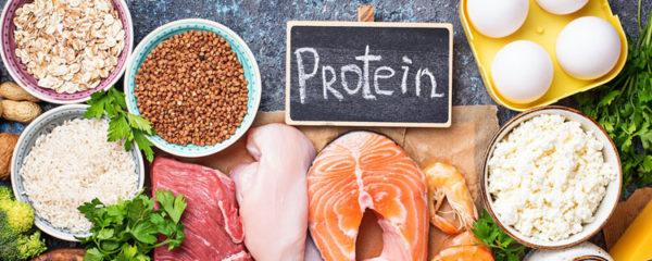 La protéine